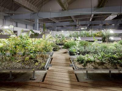 Diaspora_Garden-atelier_le_balto-06