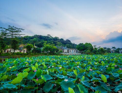 莲塘古村的保护与开发,广州