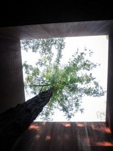 trace-architecture-office-TAO-rockcave-teahouse-weihai-shandong-china-designboom-10