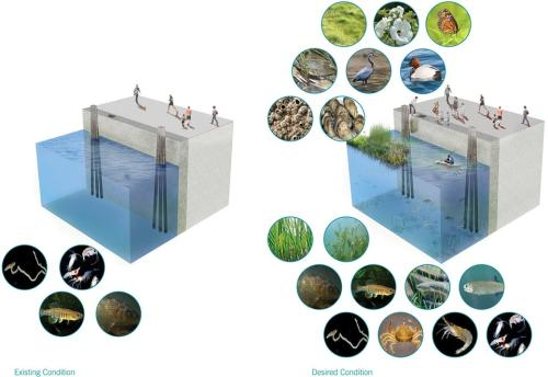 002-2018-asla-research-award-of-honor-urban-aquatic-health-integrating-new-technologies-and-resiliency-into-floating-wetlands-by-ayers-saint-gross-960x660