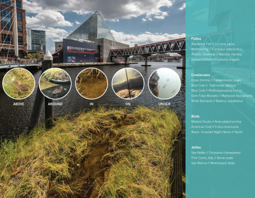 012-2018-asla-research-award-of-honor-urban-aquatic-health-integrating-new-technologies-and-resiliency-into-floating-wetlands-by-ayers-saint-gross